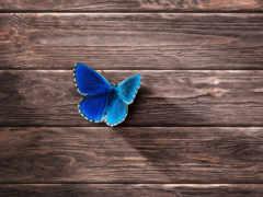 минимализм, бабочка,