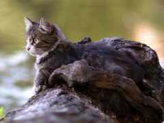 кот, animal, summer
