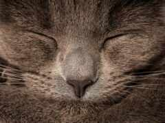 кот, серый
