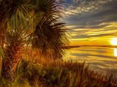 закат, palm, рассвет