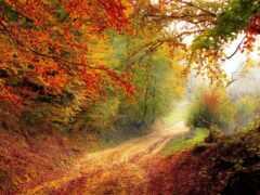 природа, лист, лес