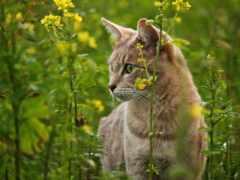 кот, festive, растение