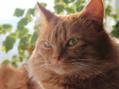 кот, red, смарт