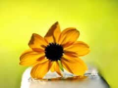 цветы, ultimate, служить