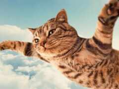 fly, коты, кот