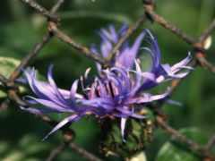 цветок, лепестки Фон № 2131 разрешение 1920x1080