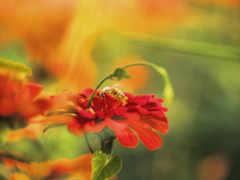 red, цветы, размытость