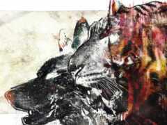 волк, собака, тигр