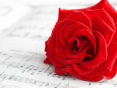 roza, cvety, розы