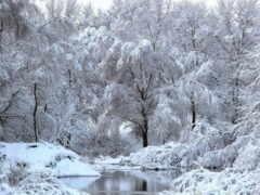 утро, февраль, dobryi