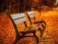 день, осень, park
