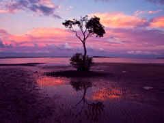 дерево, одинокое, природа