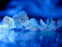 синий, макросъемка, цветок,