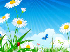ромашки, cvety, интернет