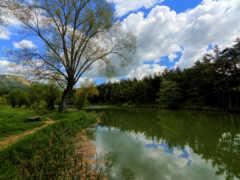 francia, naturaleza, дерево