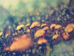 iphone, трава, cvety