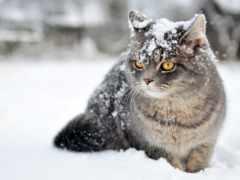 кот, winter, снег
