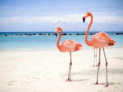 фламинго, розовый, розовые