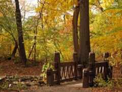 мост, landscape, природа