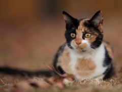 гость, cats, кот