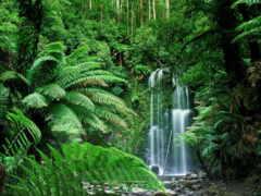 леса, амазонки, дождевые
