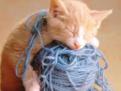 кошки, кошка, спят