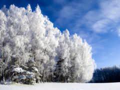 winter, природа, красивые