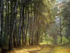 лес, russian, пользователя