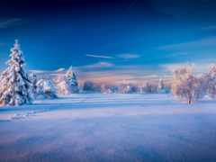 winter, небо, природа