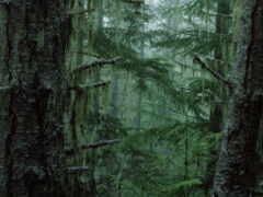 лес, taiga