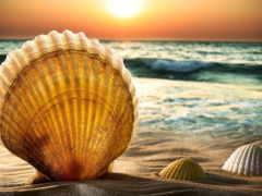 ракушки, природа, море