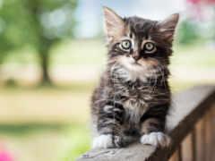 котята, кошки, котенок