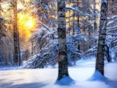 лес, winter, посмотрите