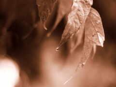 leaf, monochrome, растение