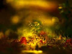 осень, трава, свет
