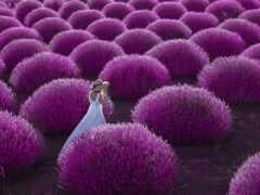 lavender, поле, turkey