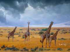 африка, небо, облако