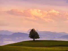 landscape, одинокий, природа