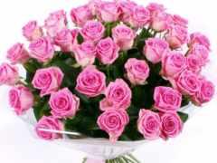 розы, цветы Фон № 33072 разрешение 1680x1050