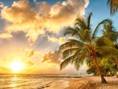 praia, мар, palmeiras