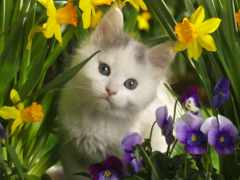 котёнок, цветы