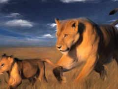 львица, львы