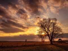 дерево, картинка, поле