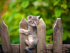забор, chaton, fond