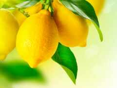 lemon, цена, branch