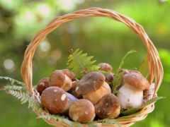 грибы, корзине, корзина