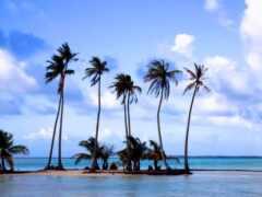 palm, пляж, море