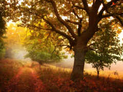 осень, деревья Фон № 33553 разрешение 1920x1200