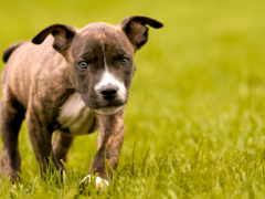 милый щенок, трава