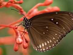 butterflies, бабочки, букеты